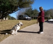 K-9 Kontrol - San Antonio Dog Training sit stay