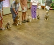 K-9 Kontrol - San Antonio Dog Training group class