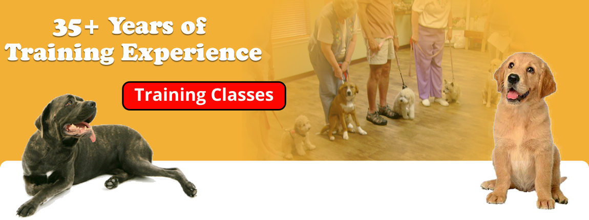 K-9 Kontrol - San Antonio Dog TrainingBanner
